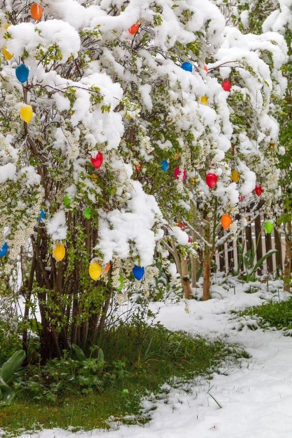 Ξαφνική κρύα θραύση σε Πάσχα με το φρέσκο πεσμένο χιόνι στο θάμνο με το ε στοκ εικόνα