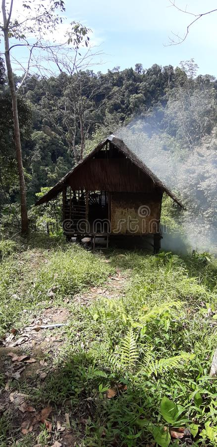 Ξενάγηση στη ζούγκλα της Σουμάτρα στοκ φωτογραφία με δικαίωμα ελεύθερης χρήσης
