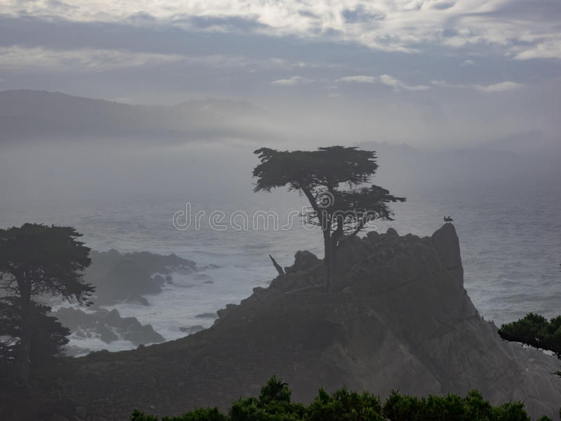 Ξεπερασμένα δέντρα κυπαρισσιών Monterey στην ακτή στοκ φωτογραφίες