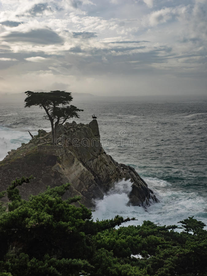 Ξεπερασμένα δέντρα κυπαρισσιών Monterey στην ακτή στοκ φωτογραφία