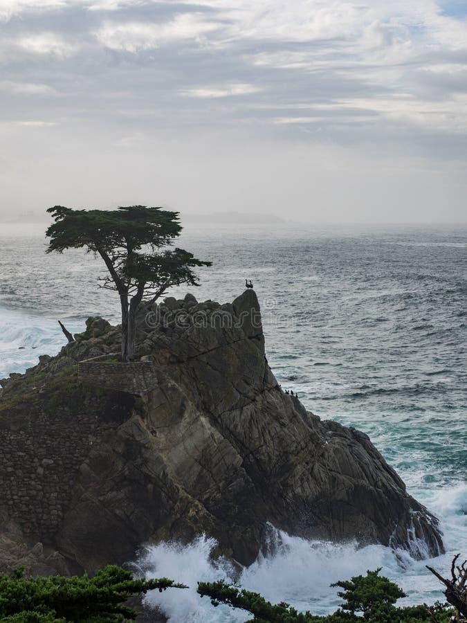 Ξεπερασμένα δέντρα κυπαρισσιών Monterey στην ακτή στοκ εικόνα