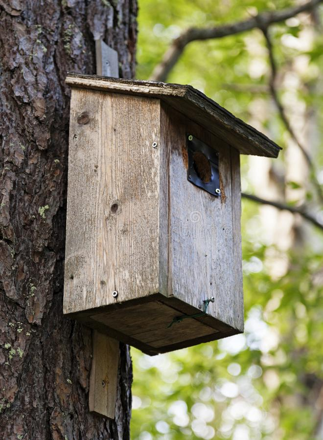 Ξεπερασμένη και χρησιμοποιημένη φωλιά πουλιών που τοποθετείται σε ένα δέντρο στοκ εικόνα με δικαίωμα ελεύθερης χρήσης