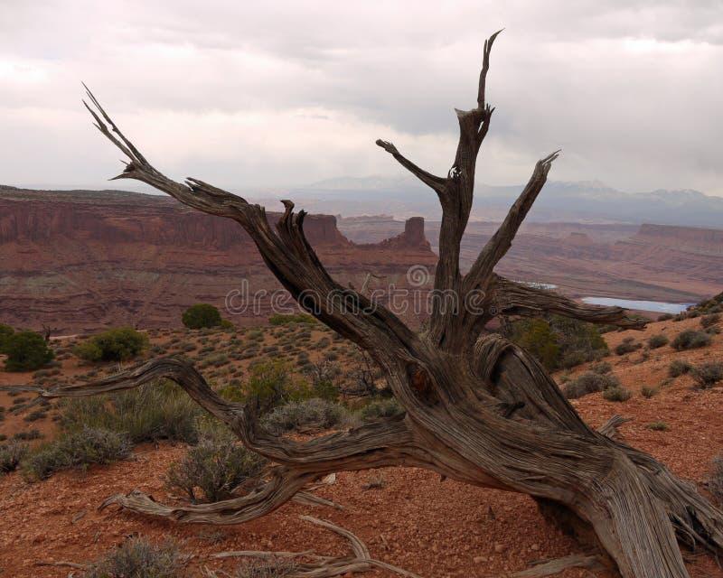 Ξεπερασμένο δέντρο στοκ φωτογραφία με δικαίωμα ελεύθερης χρήσης