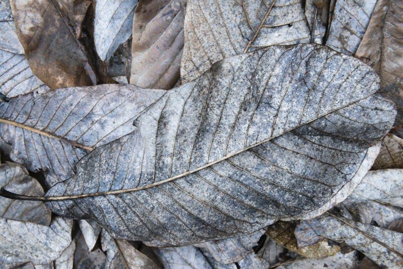 Ξεράνετε τα πεσμένα φύλλα στοκ εικόνα με δικαίωμα ελεύθερης χρήσης