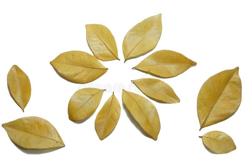 Ξεράνετε τα φύλλα που απομονώνονται στο άσπρο υπόβαθρο χρυσός στοκ εικόνα με δικαίωμα ελεύθερης χρήσης