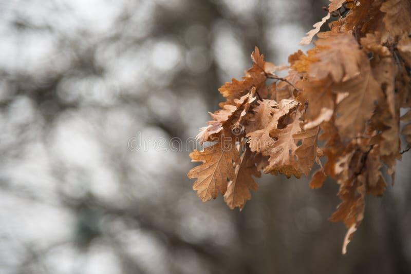 Ξεράνετε τα φύλλα στους κλάδους στοκ εικόνες με δικαίωμα ελεύθερης χρήσης