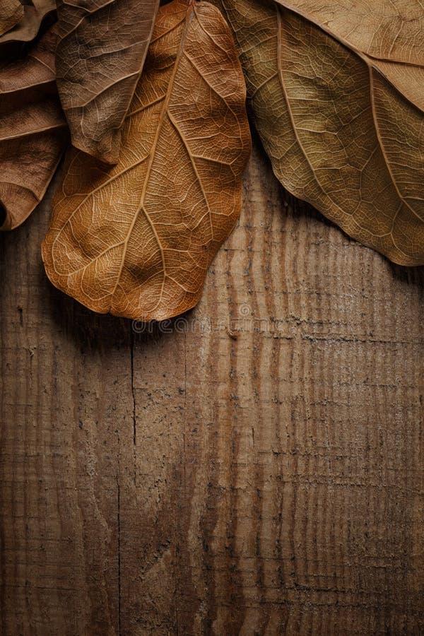 ξεράνετε τα φύλλα στο ξύλινο υπόβαθρο στοκ φωτογραφίες
