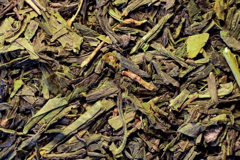 Ξεράνετε τα φύλλα του πράσινου τσαγιού, του υποβάθρου ή της σύστασης στοκ εικόνες
