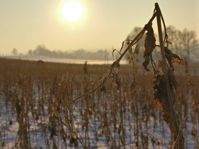 Ξεράνετε το χειμώνα στοκ φωτογραφία με δικαίωμα ελεύθερης χρήσης