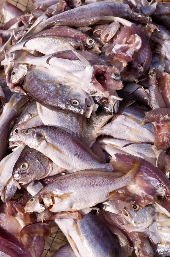 ξεραίνοντας ήλιος ψαριών στοκ φωτογραφία με δικαίωμα ελεύθερης χρήσης