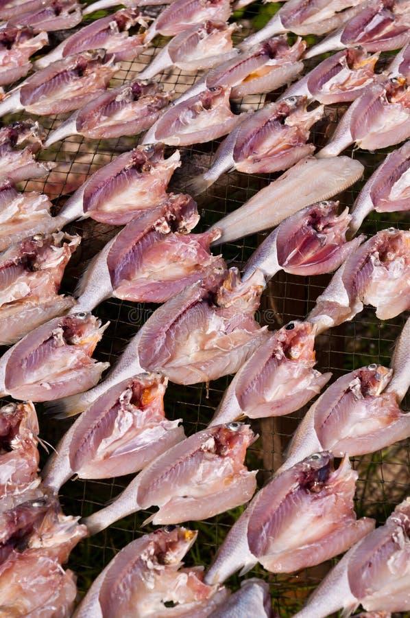 ξεραίνοντας ήλιος ψαριών στοκ φωτογραφία