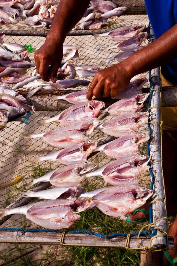 ξεραίνοντας ήλιος ψαριών στοκ εικόνα