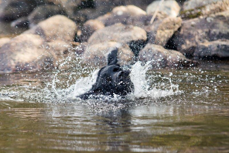 Ξεραίνοντας γούνα στη λίμνη στοκ φωτογραφία