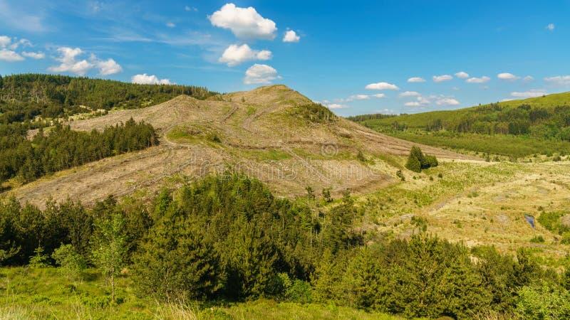 Ξεριζωμένος λόφος μετά από τα woodworks, κοντά στο tal-Υ, UK στοκ φωτογραφία με δικαίωμα ελεύθερης χρήσης