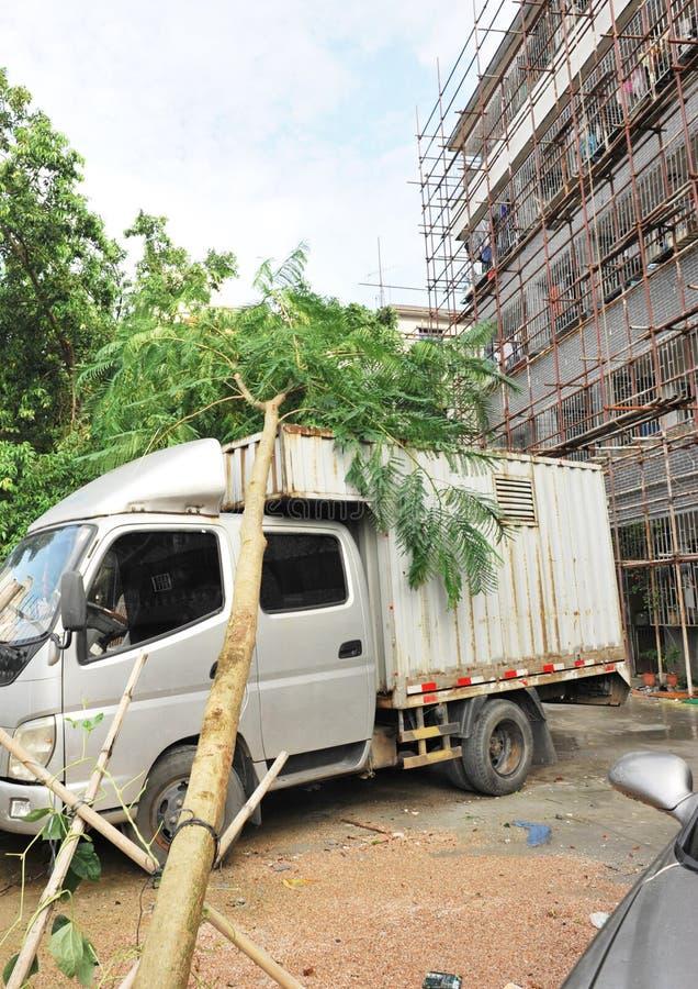 Ξεριζωμένο δέντρο στο αυτοκίνητο στοκ εικόνα με δικαίωμα ελεύθερης χρήσης