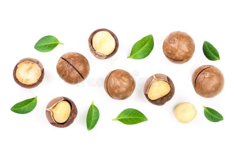 Ξεφλουδισμένα και unshelled macadamia καρύδια με τα φύλλα που απομονώνονται στο άσπρο υπόβαθρο με το διάστημα αντιγράφων για το κ στοκ φωτογραφίες με δικαίωμα ελεύθερης χρήσης