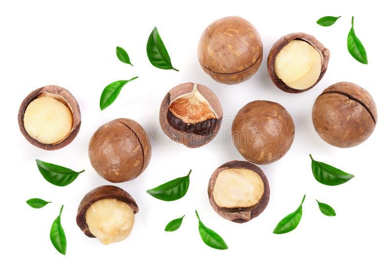 Ξεφλουδισμένα και unshelled macadamia καρύδια με τα φύλλα που απομονώνονται στο άσπρο υπόβαθρο Τοπ όψη Επίπεδος βάλτε το σχέδιο στοκ φωτογραφία με δικαίωμα ελεύθερης χρήσης