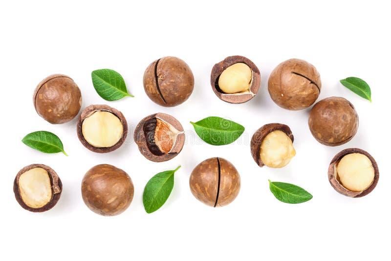 Ξεφλουδισμένα και unshelled macadamia καρύδια με τα φύλλα που απομονώνονται στο άσπρο υπόβαθρο με το διάστημα αντιγράφων για το κ στοκ φωτογραφία