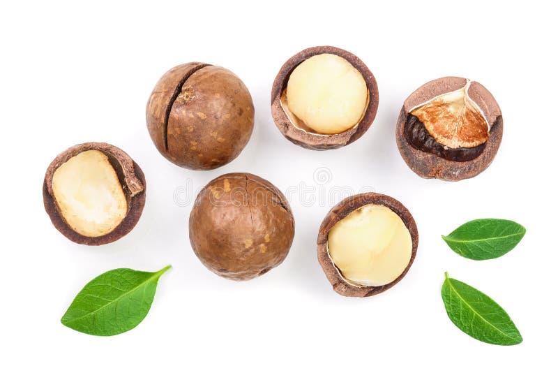Ξεφλουδισμένα και unshelled macadamia καρύδια με τα φύλλα που απομονώνονται στο άσπρο υπόβαθρο Τοπ όψη Επίπεδος βάλτε το σχέδιο στοκ φωτογραφίες