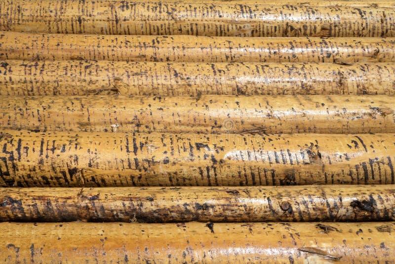 Ξεφλουδισμένοι υγροί κορμοί δέντρων στοκ εικόνα