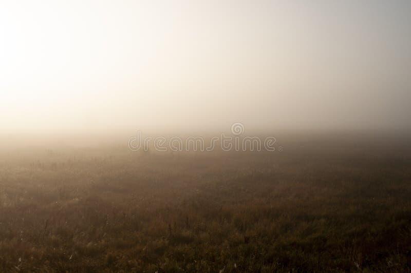 Ξημερώματα στον τομέα με την ομίχλη φθινοπώρου και τις πτώσεις του νερού στον αέρα Αποχρώσεις καφετιού Τίποτα δεν θα μπορούσε μακ στοκ εικόνα με δικαίωμα ελεύθερης χρήσης