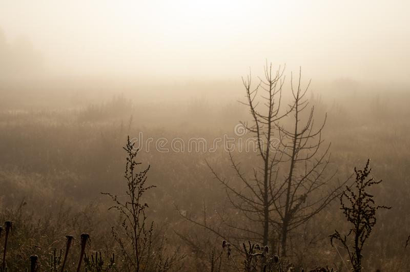 Ξημερώματα στον τομέα με την ομίχλη φθινοπώρου και τις πτώσεις του νερού στον αέρα Αποχρώσεις καφετιού Τίποτα δεν θα μπορούσε μακ στοκ φωτογραφία με δικαίωμα ελεύθερης χρήσης