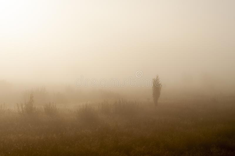 Ξημερώματα στον τομέα με την ομίχλη φθινοπώρου και τις πτώσεις του νερού στον αέρα Αποχρώσεις καφετιού Τίποτα δεν θα μπορούσε μακ στοκ φωτογραφία