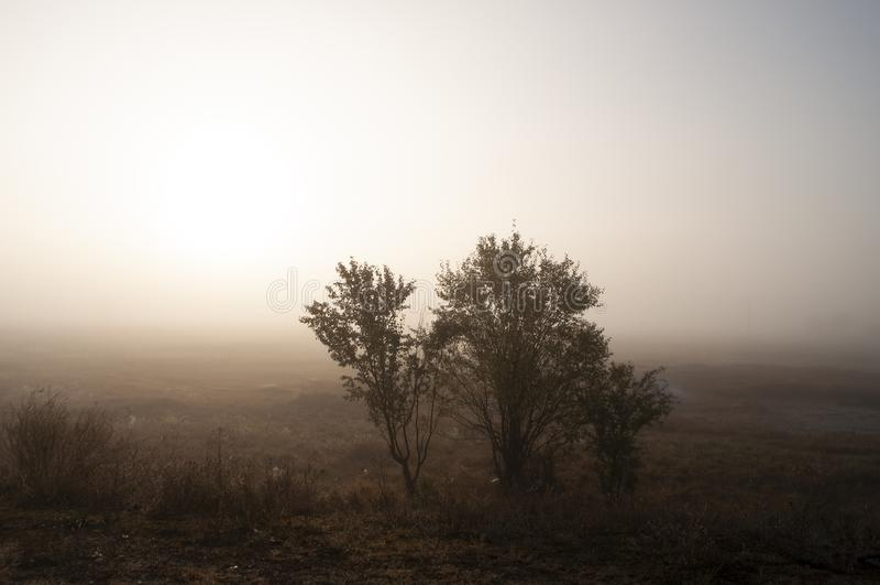 Ξημερώματα στον τομέα με την ομίχλη φθινοπώρου και τις πτώσεις του νερού στον αέρα Αποχρώσεις καφετιού Τίποτα δεν θα μπορούσε μακ στοκ φωτογραφίες