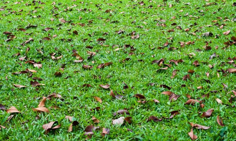 ξηρά αυλή φύλλων στοκ φωτογραφία με δικαίωμα ελεύθερης χρήσης