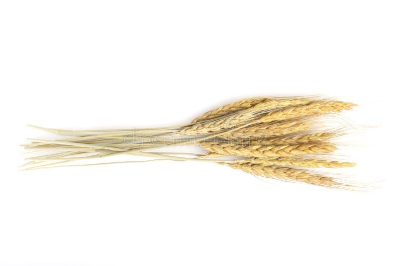 Ξηρά βρώμη, απομονωμένη σιτάρι στοκ εικόνες με δικαίωμα ελεύθερης χρήσης