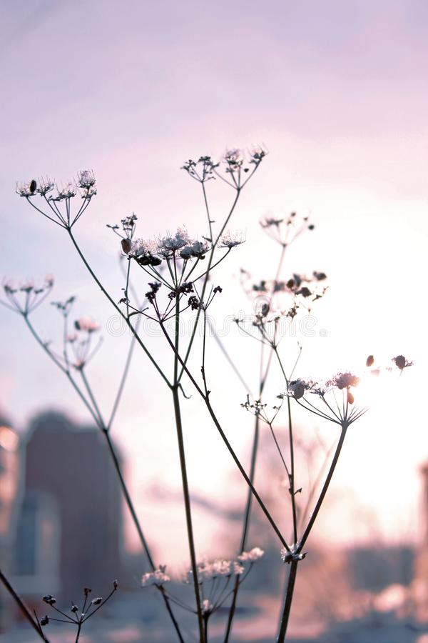 Ξηρά επάνθιση στις ακτίνες του ηλιοβασιλέματος στοκ φωτογραφία με δικαίωμα ελεύθερης χρήσης