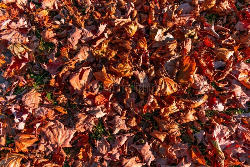 Ξηρά ζωηρόχρωμα φύλλα φθινοπώρου στο έδαφος στοκ εικόνες