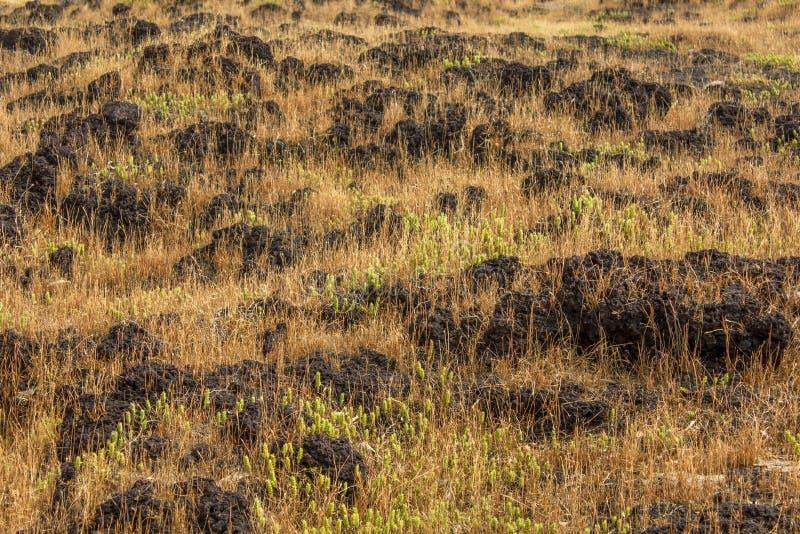 Ξηρά και πράσινη χλόη μεταξύ των πετρών στη σαβάνα στοκ φωτογραφία