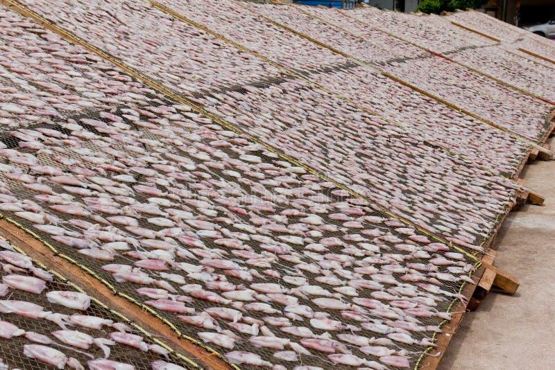ξηρά καλαμάρια στοκ εικόνα με δικαίωμα ελεύθερης χρήσης