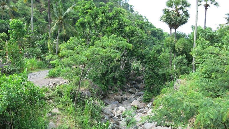 Ξηρά κοίτη ποταμού στα βουνά στο ινδό νησί του Μπαλί Non-heated δάσος χωρίς ανθρώπινη επέμβαση Πολύβλαστη βλάστηση στη ζούγκλα στοκ εικόνα με δικαίωμα ελεύθερης χρήσης