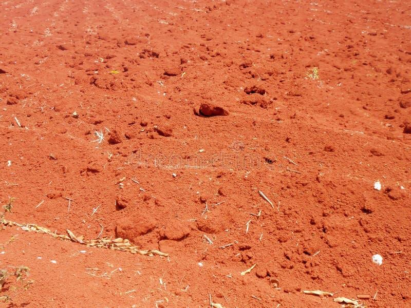 Ξηρά κόκκινη εδαφολογική σύσταση αργίλου Terra Rossa στοκ εικόνα με δικαίωμα ελεύθερης χρήσης
