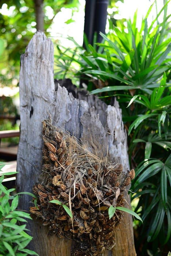 Ξηρά λουλούδια στο ξύλινο κούτσουρο με το σαλιασμένο υπόβαθρο στοκ εικόνα
