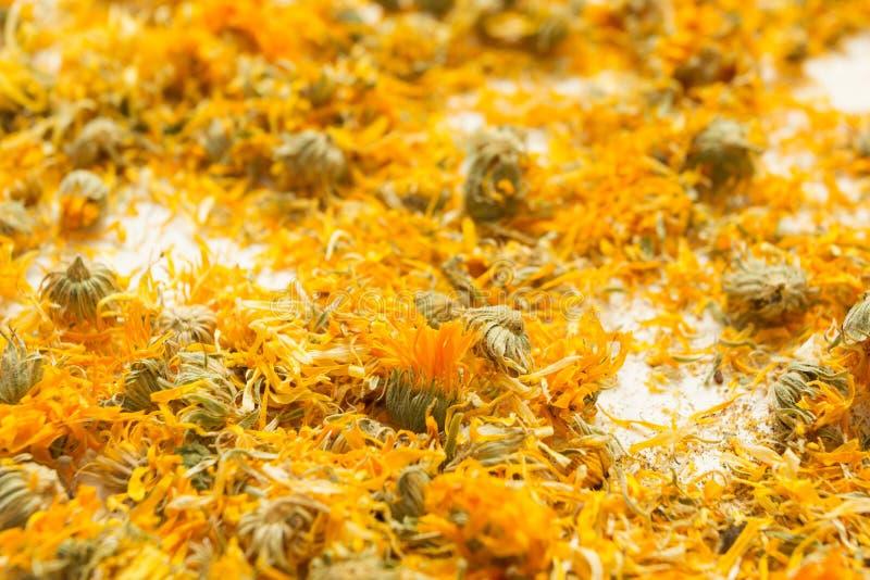 Ξηρά λουλούδια του ιατρικού calendula, ομοιοπαθητική και aromatherapy στοκ εικόνα