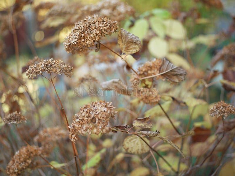 Ξηρά λουλούδια φθινοπώρου στοκ φωτογραφίες με δικαίωμα ελεύθερης χρήσης