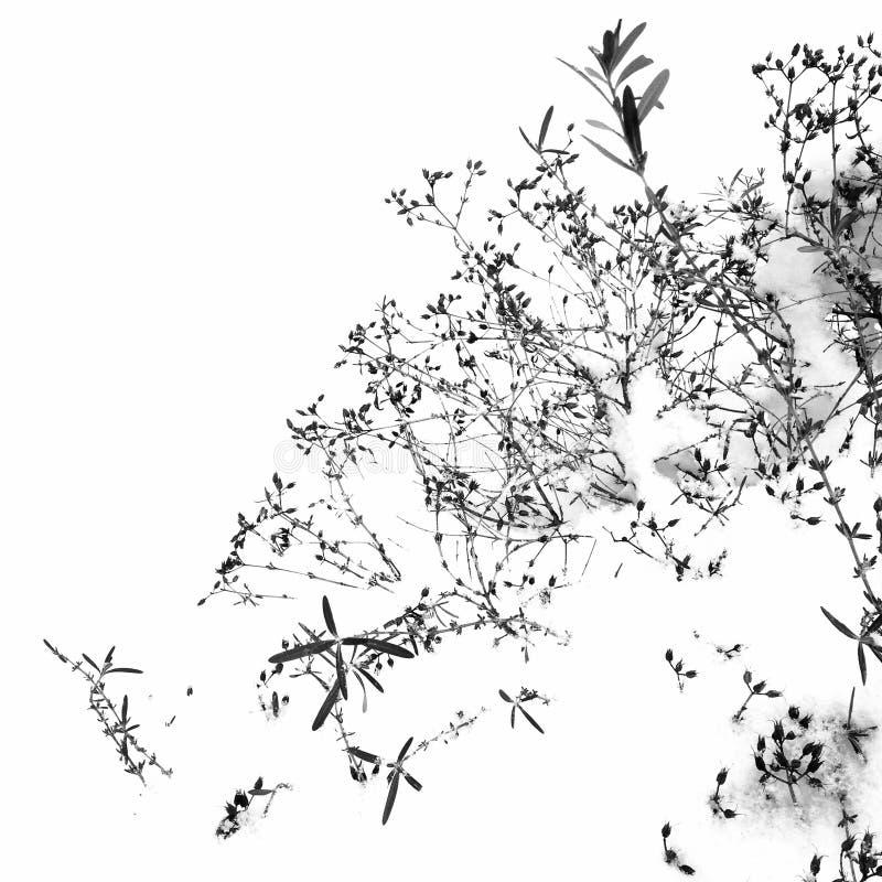Ξηρά λουλούδια στο χιόνι στοκ φωτογραφίες με δικαίωμα ελεύθερης χρήσης