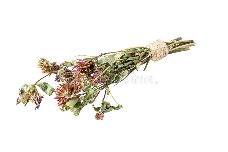 Ξηρά λουλούδια τριφυλλιού για το χρήσιμο βοτανικό τσάι σε ένα άσπρο υπόβαθρο στοκ εικόνα με δικαίωμα ελεύθερης χρήσης
