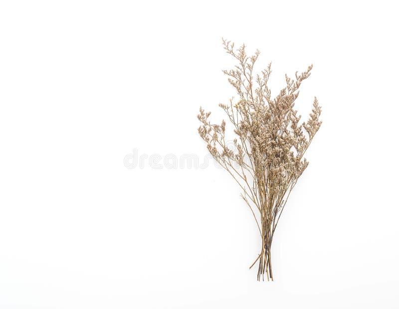 Ξηρά λουλούδια Caspia στοκ εικόνα με δικαίωμα ελεύθερης χρήσης