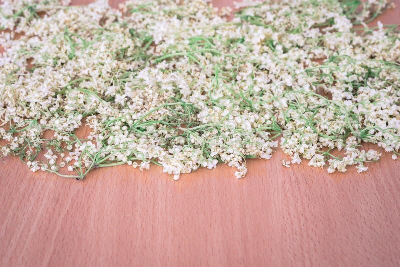 Ξηρά λουλούδια elderberry στοκ φωτογραφία με δικαίωμα ελεύθερης χρήσης