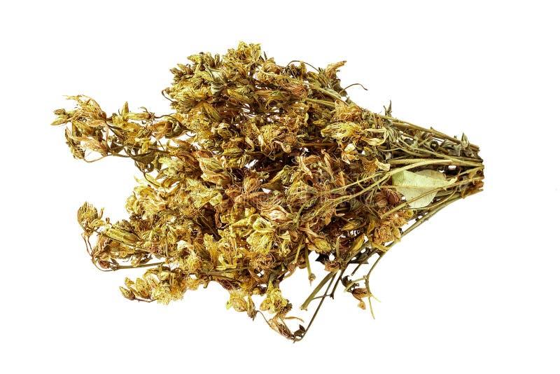 Ξηρά λουλούδια ST John& x27 wort του s για ένα χρήσιμο βοτανικό τσάι σε ένα λευκό στοκ εικόνα