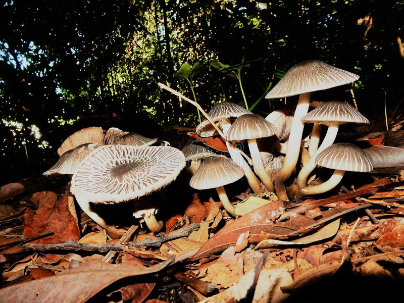 Ξηρά πεσμένα φύλλα στη ζωντανή φύση στοκ φωτογραφίες με δικαίωμα ελεύθερης χρήσης