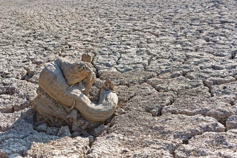 Ξηρά ρίζα δέντρων στο ξηρό χώμα στοκ φωτογραφία