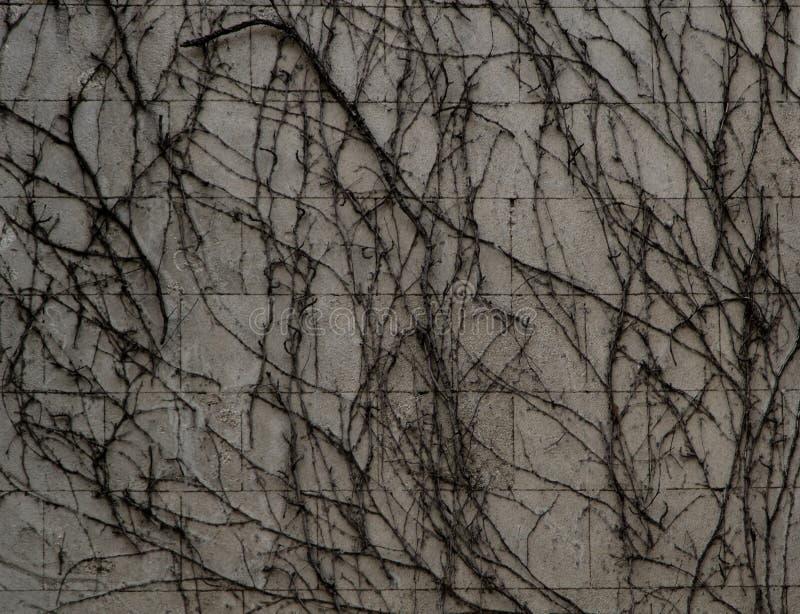 Ξηρά σύσταση εγκαταστάσεων που επεκτείνεται σε έναν τοίχο στοκ φωτογραφίες