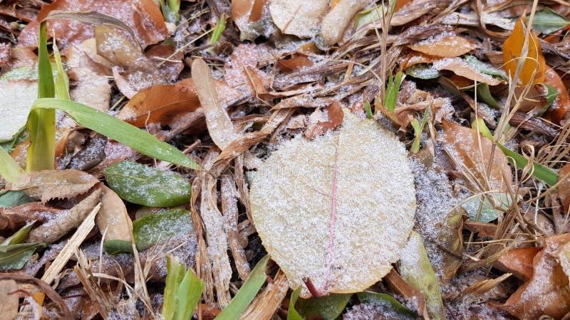 Ξηρά σύσταση φύλλων φθινοπώρου που καλύπτεται με τα πρώτα κρύσταλλα χιονιού στοκ εικόνες με δικαίωμα ελεύθερης χρήσης