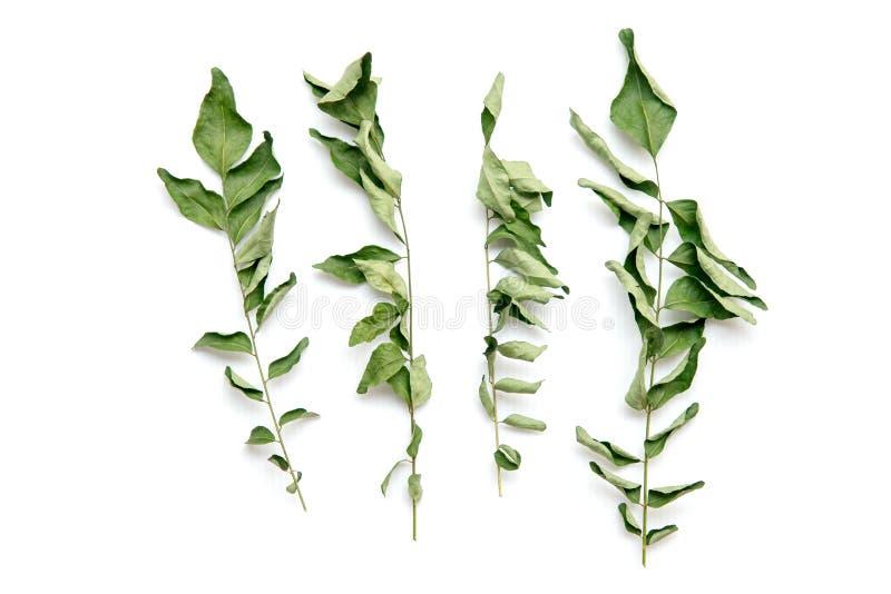Ξηρά φύλλα κάρρυ στοκ φωτογραφίες με δικαίωμα ελεύθερης χρήσης