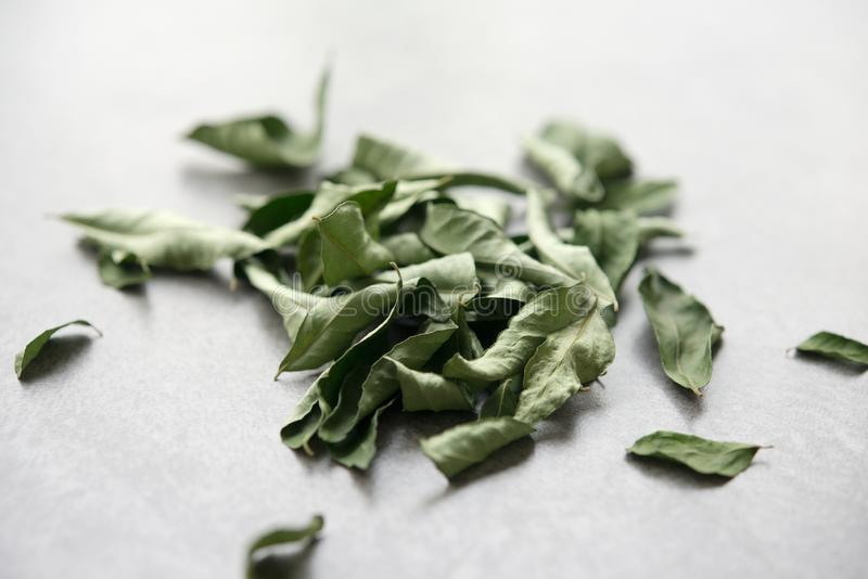Ξηρά φύλλα κάρρυ στοκ εικόνα με δικαίωμα ελεύθερης χρήσης